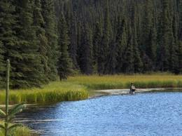 Denali high country fishing