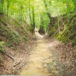 The Natchez Trace National Scenic Trail